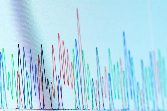 Chromatographic-Peaks