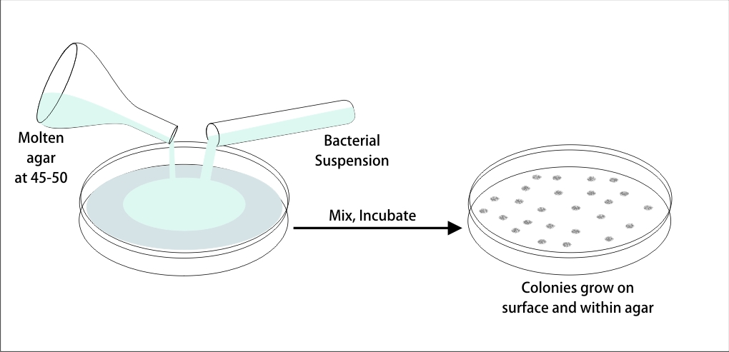 Familiarize with culture media-the growth and survival media of microorganisms