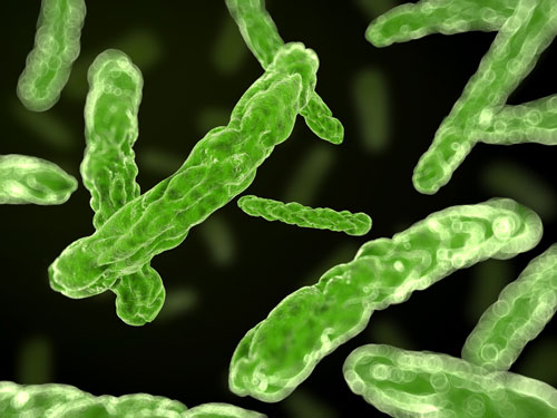 What conditions are favourable to growth of Microorganisms?