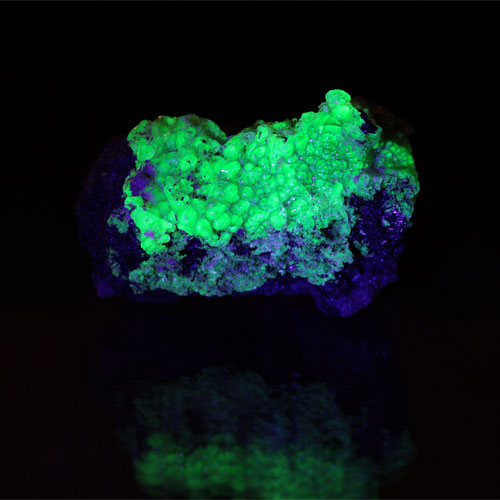 How are Fluorescence,Phosphorescence,Bioluminiscence and Chemiluminiscence different from each other?