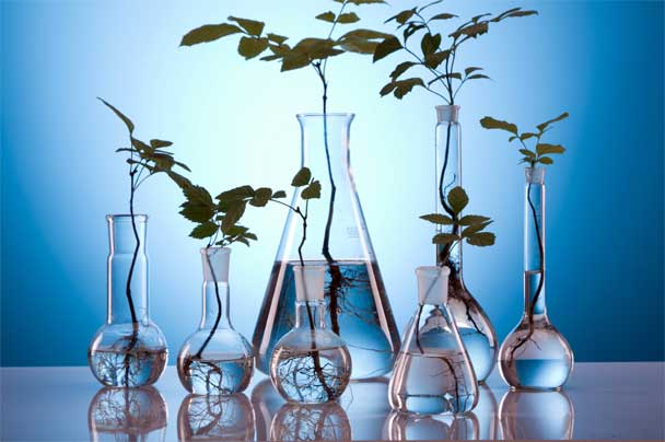 Show concern for environment at time of disposal of laboratory wastes